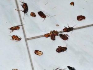 eliminare scarafaggi