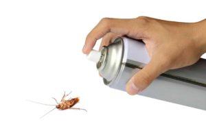scarafaggi blatte in casa