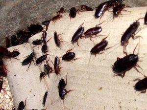 trappole blatte scarafaggi