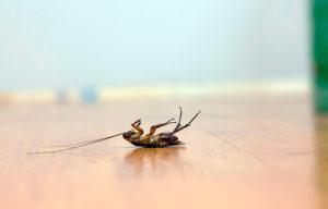veleno scarafaggi blatte