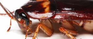 scarafaggi in cantina