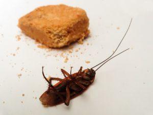 scarafaggio in casa morto