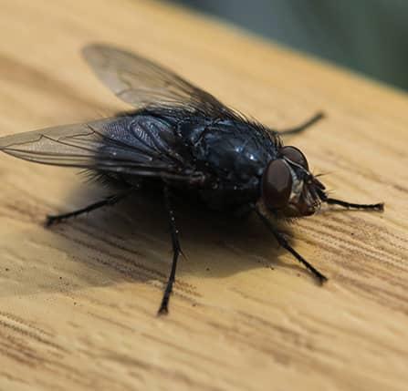 allontanare le mosche