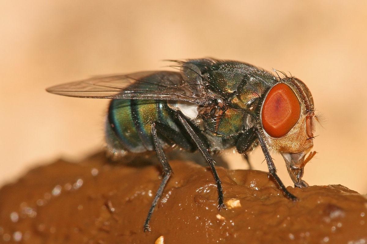 rimedi contro le mosche