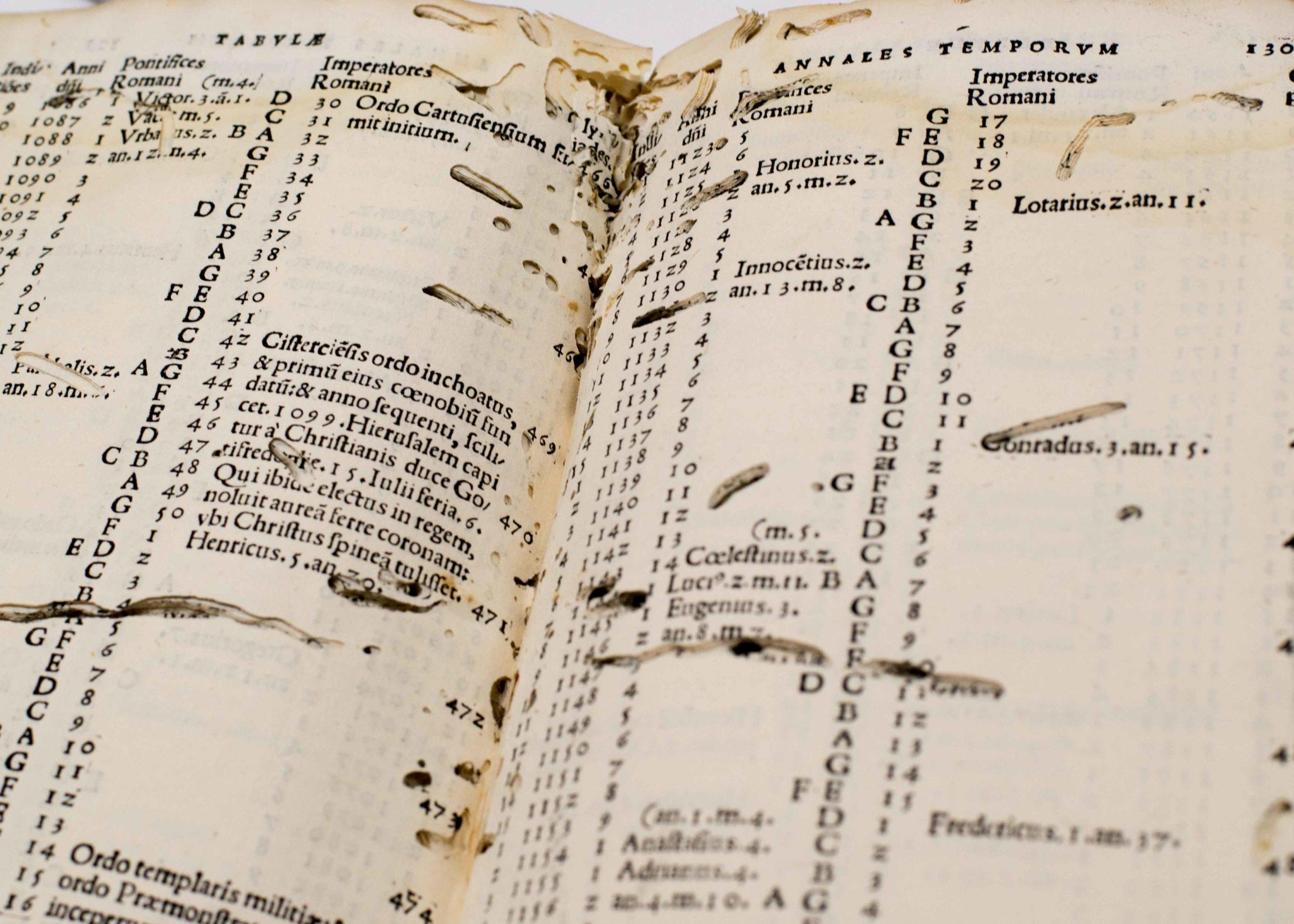 silverfish rovinano libri
