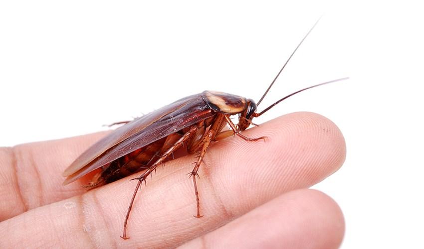 morsi di scarafaggi