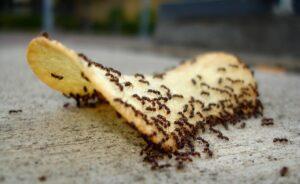 metodo della nonna formiche